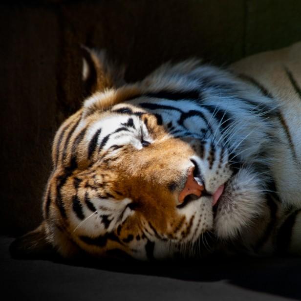 Розамунда пилчер спящий тигр скачать бесплатно fb2